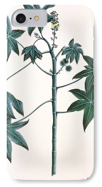 Castor Oil Plant Phone Case by Indian School
