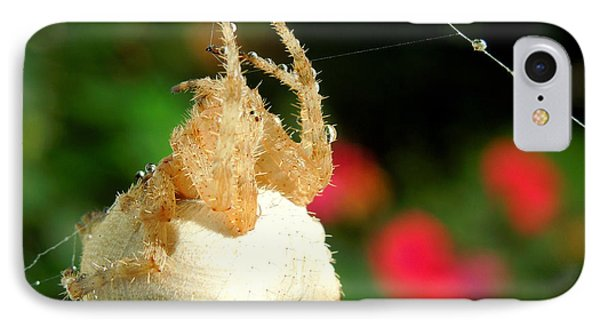 Cat-faced Spider With Pink IPhone Case by Heidi Manly