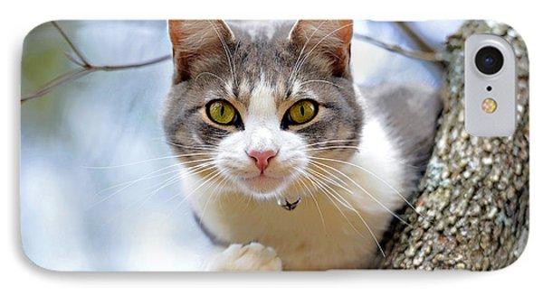 Cat In A Tree Phone Case by Susan Leggett