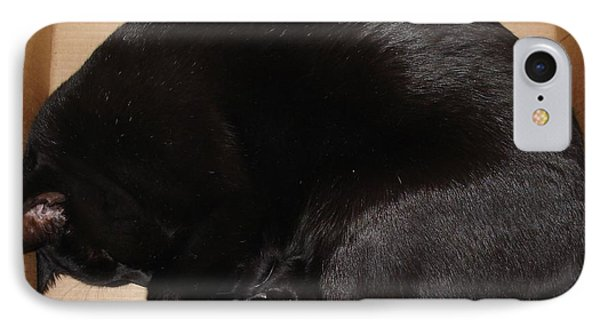 IPhone Case featuring the photograph Cat In The Box by Kerri Mortenson