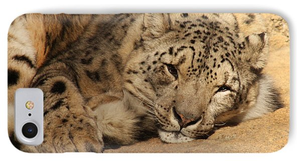 IPhone Case featuring the photograph Cat Nap by Bob and Jan Shriner