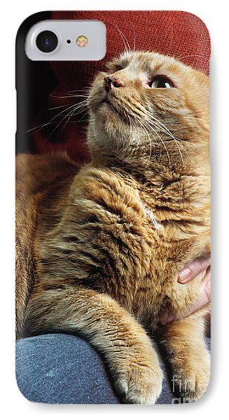 Cat On Lap Phone Case by James L. Amos