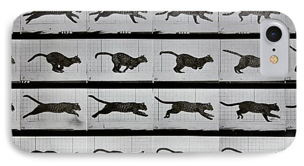 Cat Running IPhone Case by Eadweard Muybridge