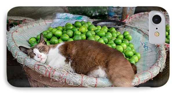 Cat Sleeping Among The Limes IPhone Case by Dean Harte
