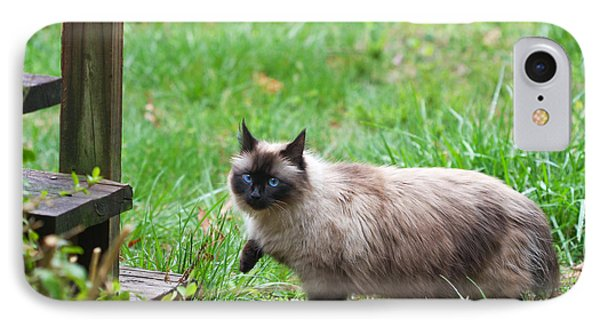 Cat Walking IPhone Case