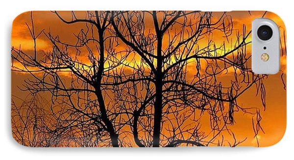 Catalpa Orange IPhone Case by Fred  Sheridan