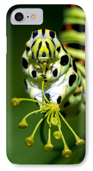 Caterpillar Of The Old World Swallowtail IPhone Case by Torbjorn Swenelius