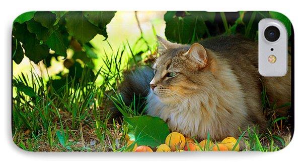 Cat's Mountain Summer Phone Case by Susanne Still