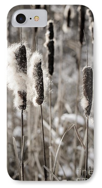 Cattails In Winter IPhone Case