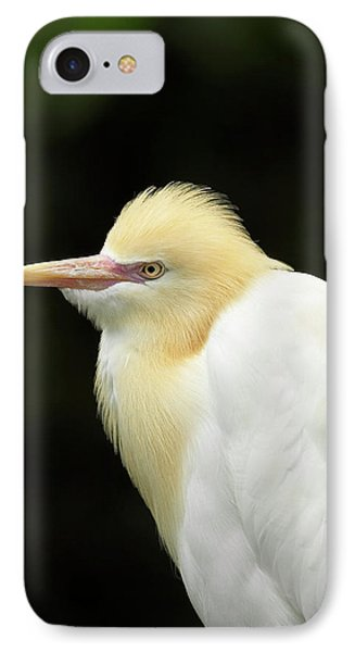 Cattle Egret (ardea Ibis IPhone Case by David Wall