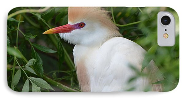 Cattle Egret In Breeding Season IPhone Case by Jodi Terracina