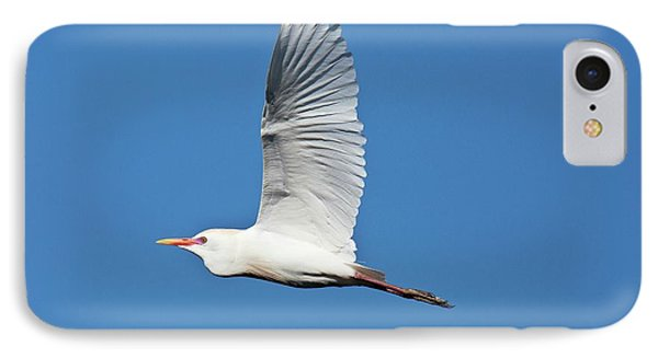 Cattle Egret In Flight IPhone Case by Bob Gibbons