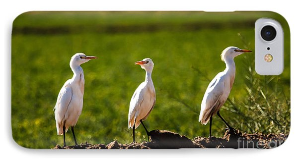 Cattle Egrets IPhone Case by Robert Bales