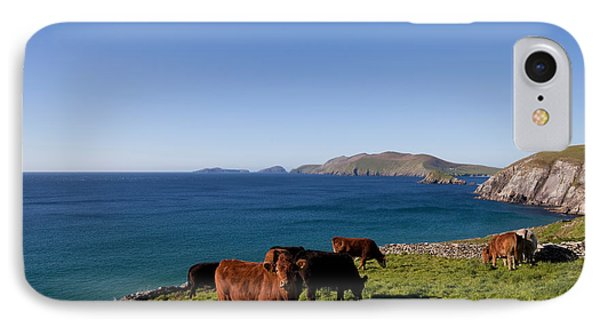 Cattle With Distant Blasket Islands IPhone Case by Panoramic Images