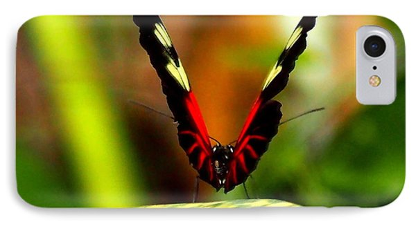 IPhone Case featuring the photograph Cattleheart Butterfly  by Amy McDaniel