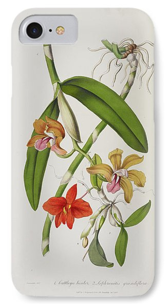 Cattleya Bicolor IPhone Case by British Library