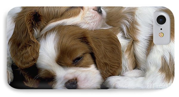 Cavalier King Charles Spaniel  IPhone Case by Marvin Blaine