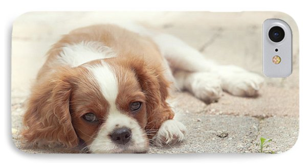 Cavalier Puppy Phone Case by Kay Pickens