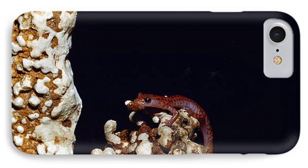 Cave Salamander IPhone Case by Charles E. Mohr