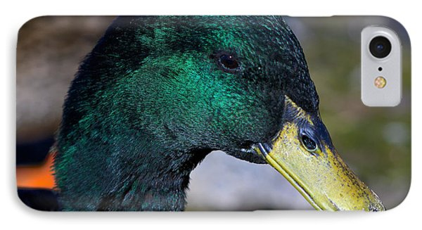 Cayuga Duck  IPhone Case by Stephen  Johnson