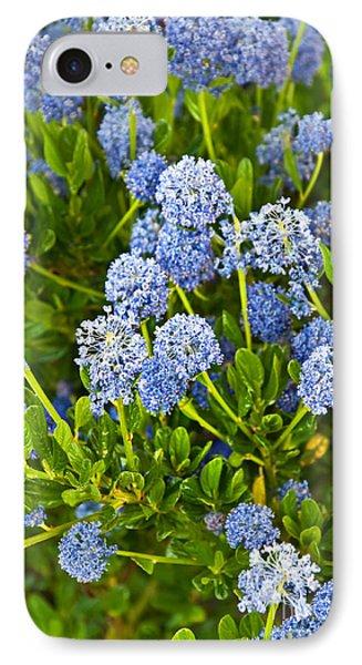 Ceanothus Impressus Santa Barbara Flowering Bush IPhone Case