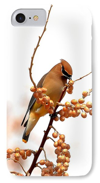 Cedar Wax Wing IPhone 7 Case by Floyd Tillery