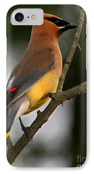 Cedar Wax Wing II IPhone Case by Roger Becker