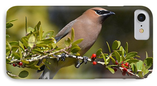 IPhone Case featuring the photograph Cedar Waxwing And Red Berries by Kathy Baccari