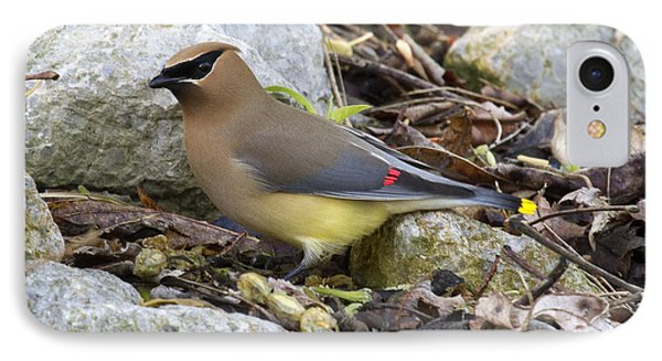 Cedar Waxwing IPhone 7 Case by Eric Mace