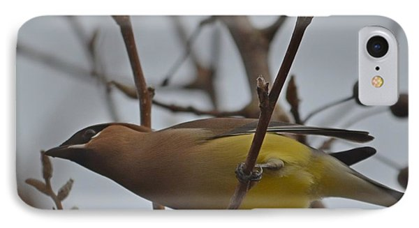 IPhone Case featuring the photograph Cedar Waxwing Feasting In Foggy Cherry Tree by Jeff at JSJ Photography