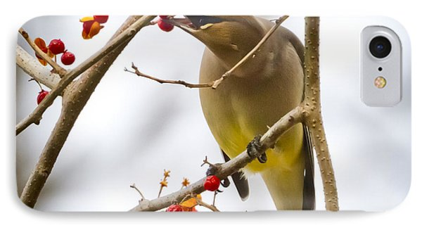 IPhone 7 Case featuring the photograph Cedar Waxwing by Ricky L Jones