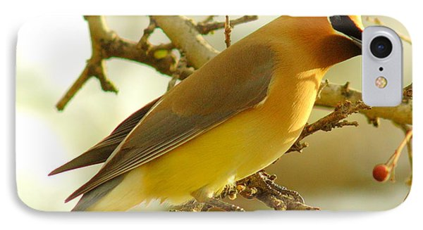 Cedar Waxwing IPhone 7 Case by Robert Frederick