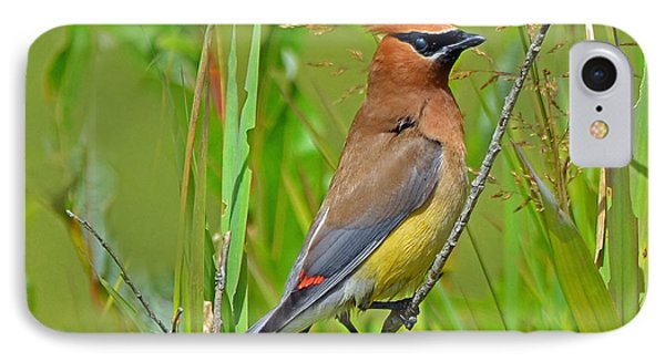 IPhone Case featuring the photograph Cedar Waxwing by Rodney Campbell