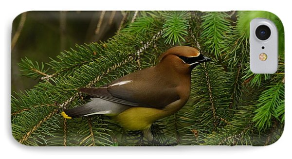 IPhone Case featuring the photograph Cedar Waxwing by Steven Clipperton