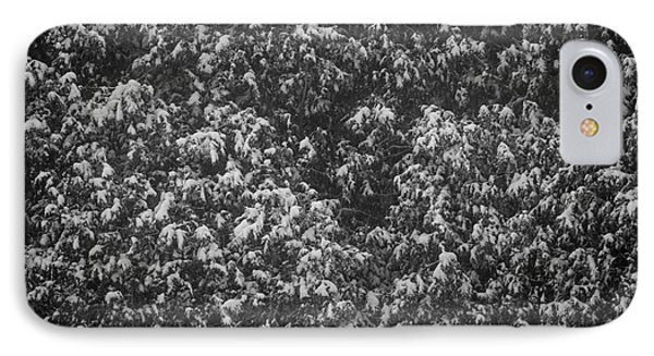 Cedars In Snow IPhone Case by Elena Elisseeva