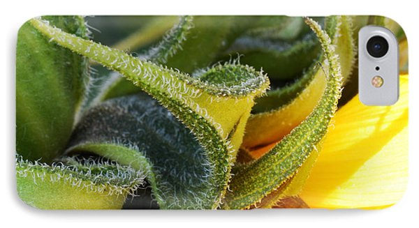 Celebration Sunflower IPhone Case by Wendy Wilton