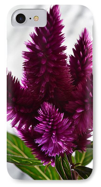 Celosia IPhone Case by Terence Davis