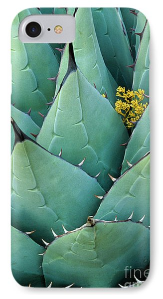 Century Plant And Tiny Blossom IPhone Case by Inge Johnsson