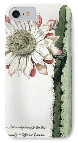 Cereus Erectus Altissimus Syrinamensis IPhone Case