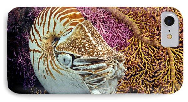 Chambered Nautilus _nautilus Pompilius__ Indonesia IPhone Case