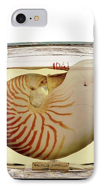 Chambered Nautilus Specimen IPhone Case