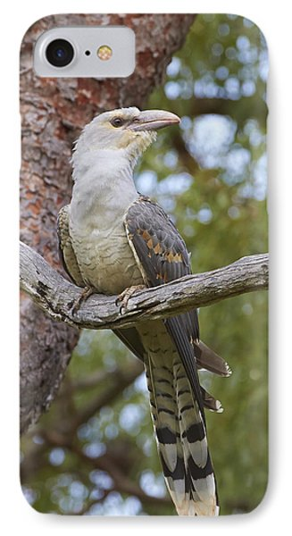 Channel-billed Cuckoo Fledgling IPhone Case by Martin Willis