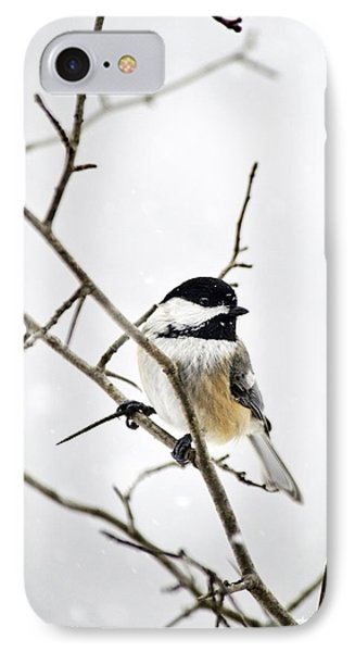 Charming Winter Chickadee IPhone Case by Christina Rollo