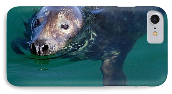 Chatham Harbor Seal IPhone Case by Stuart Litoff