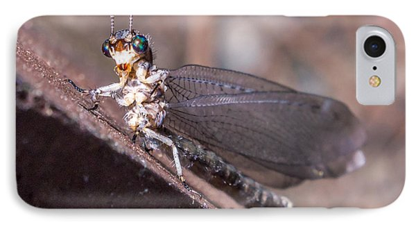 Chauliodes IPhone Case by Rob Sellers
