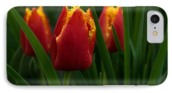 Cheerfully Wet Red And Yellow Tulips IPhone Case by Georgia Mizuleva
