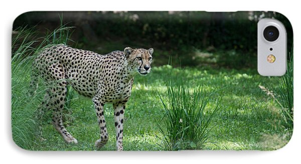 Cheetah IPhone Case by Carol Ailles