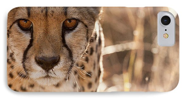Cheetah Conservation Fund, Namibia IPhone 7 Case by Janet Muir