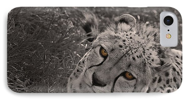 Cheetah Eyes IPhone Case by Martin Newman
