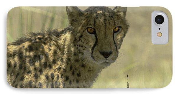 Cheetah Gaze Phone Case by LeeAnn McLaneGoetz McLaneGoetzStudioLLCcom